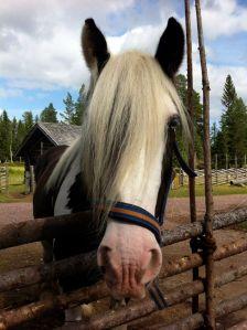 Lindvallens Fäbod, ponnyridning, häst & vagn, café, fäbodar, Jonas i Sälen