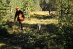 Jonas Hunting Experience, Jonas Hunting, moose, game-bird, Lodge, Scandinavian Mountains