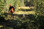 Jonas Hunting Experience, jakt i Sälen, älgjakt, ripjakt, skogsfågeljakt, Sälenfjällen