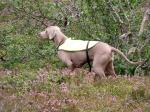 Fågelhund, jakt med fågelhund, jaktkurs, jakthund, Jonas i Sälen, Sälenfjällen