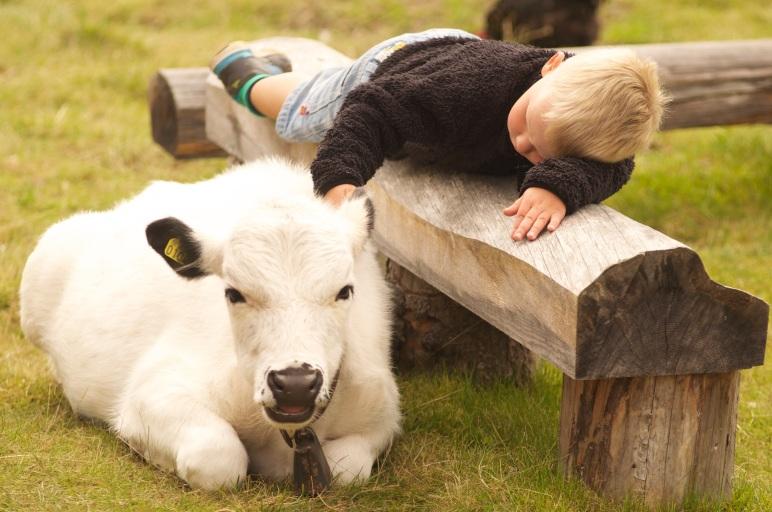 Barnens Fäbod, Lindvallens Fäbod, sommaröppet, aktiviteter för barn, fäbodcafé, ponnyridning, Sälen