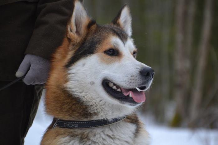 Fågelhundkurs, fågelhund, Inger Eriksson, Ulf Andersson, Calle Elström, Hunting Assistance, Eftersökskurs, Jonas i Sälen