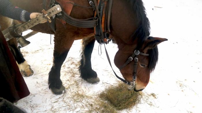 Häst & släde, horse sledge, Ardenner, Lindvallens Fäbod, Jonas i Sälen, Sälen, Sälenfjällen