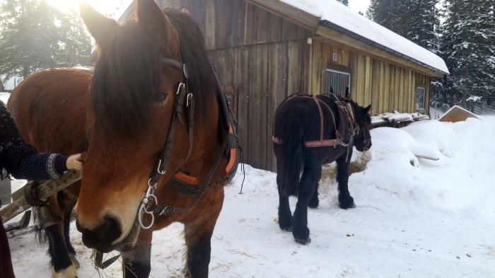 Häst & släde, horse sledge, Lindvallens Fäbod, farm hill, Dalarna, Sälenfjällen, Jonas i Sälen