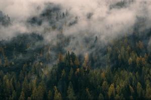 Tjäder, Orre, skogsfågel, stående fågelhund, trädskällare, Jonas i Sälen, hunt, hunting, Jonas Hunting, hunting package