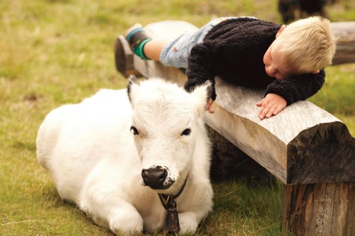 barnens fäbod, klappa djur, träffa djur, Lindvallens Fäbod, barn lindvallen aktiviteter sälen, sommaröppet lindvallen, djur på fäboden, café lindvallen