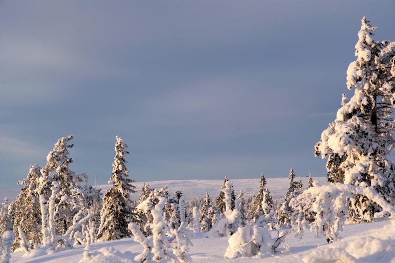 Sälenfjällen, Sälen, Jonas i Sälen, vandringsleder sälen, längdspår sälen, afterski sälen, vildmark, fjällnatur, norrsken, snödjup, Dalarna