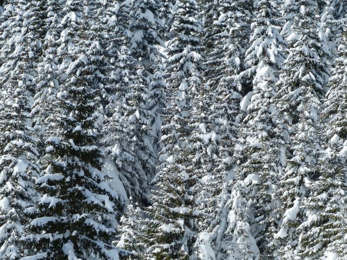 Jonas i Sälen, snö, vinter, sälen snö, skidkonferens sälen, julbord sälen, konferens sälen, boka julbord, storstuga sälen, Tandådalens Wärdshus, Lindvallens Fäbod, Gattar