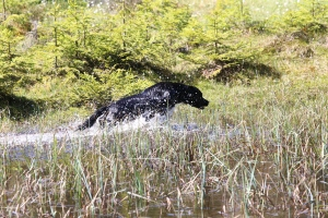 älghund, laikor, drever, pointer, stående fågelhund, hunddressyr, jeep, jaktmässa sälen, jonas i sälen game fair, jaktmässa 2017