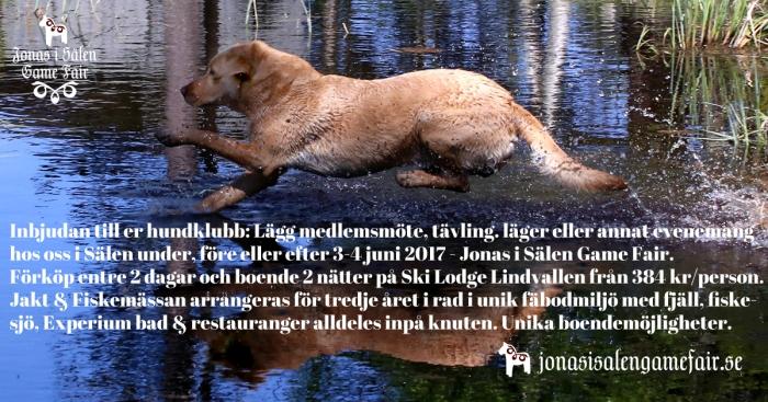 hundklubbar, jakthund, jaktmässa sälen, gamefair, sälen, Jonas i Sälen, jonas i Sälen Game Fair, Lindvallens Fäbod, Sälen
