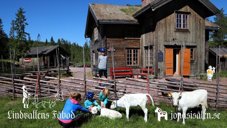 ponny, ponnyridning, ponnyridning sälen, Lindvallens Fäbod, Jonas i Sälen, djur på gård, klappa djur, våffla, café, café lindvallen, fäbod sälen, fiske, fiske i sälen, Olarsgården, restaurang, Olarsgården restaurang, Sälen, fotbolls VM